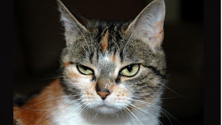 gatto buffo