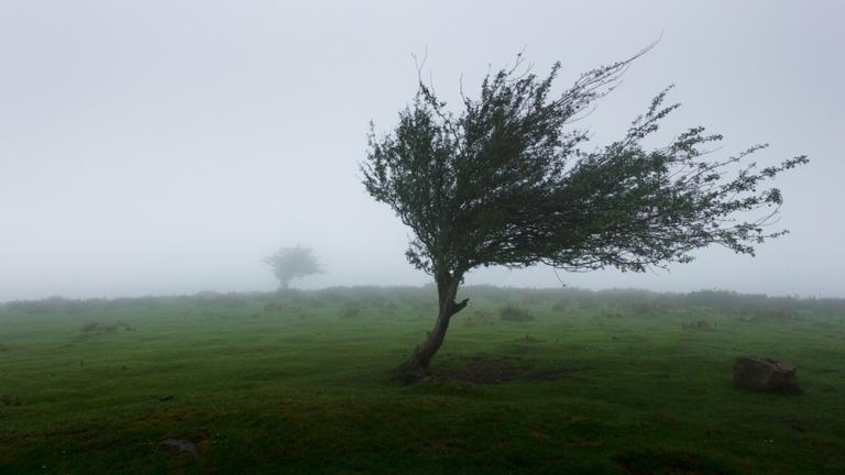 albero vento